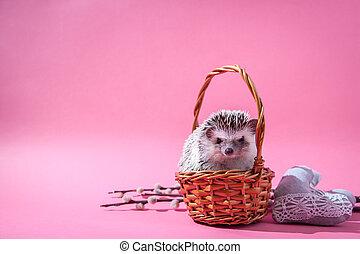 Little hedgehog sits in the basket on pink background