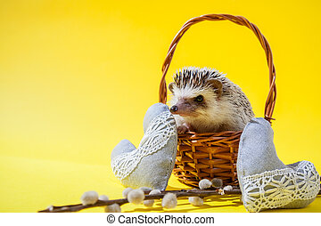 Little hedgehog sits in the basket on yellow background