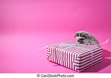 Little hedgehog sits on the present on pink background
