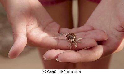 Little hermit crab crawling on woman hands. Phuket island,...
