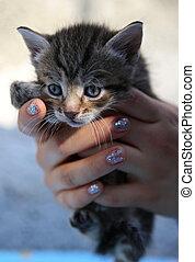 Little homeless kitten in the hands