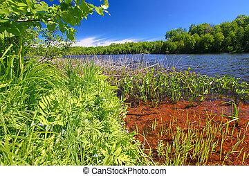 Little Horsehead Lake Landscape Wisconsin
