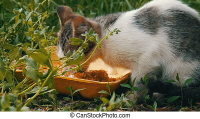 Little Hungry Kitten Eats in a Green Grass - Little Hungry...
