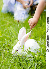 kid touching white rabbit ears - Little kid touching white...