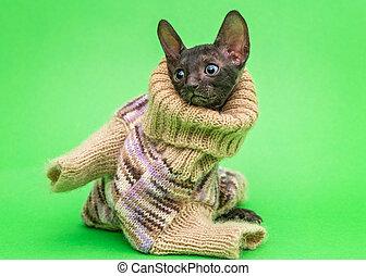 Little kitten  in a knitted sweater