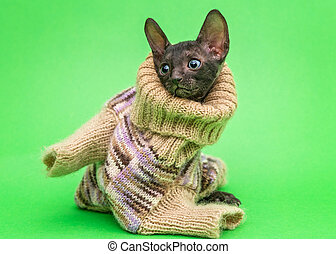 Little kitten  in a knitted sweater