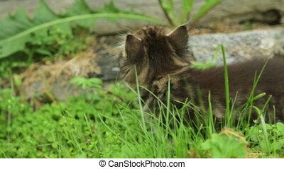 Little kitten in grass