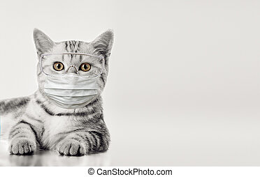 little kitten in medical mask, on grey background, isolated...