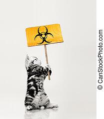 little kitten in medical maskhold banner
