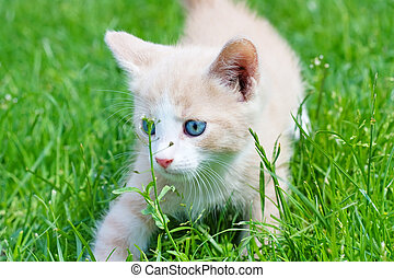 little kitten in the grass