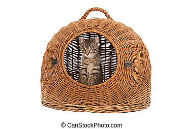 little striped kitten in big travel basket isolated over white background