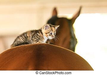 Little kitten kitty cat animal on horse horseback - Little...