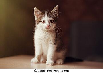 Little kitten looking at the camera