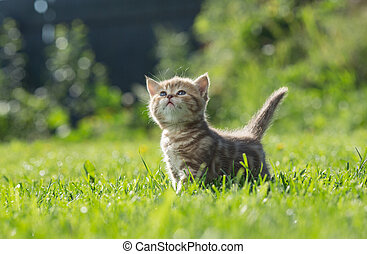Little kitten looking up in green grass