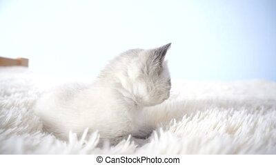 little kitten on a fluffy blanket