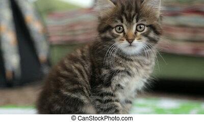 Little kitten on floor