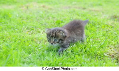 Little kitten on the grass