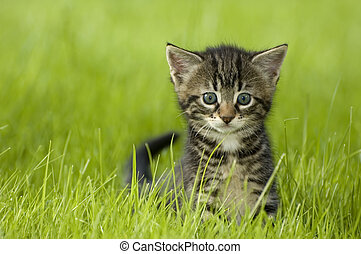 kitten - little kitten playing on the grass close up