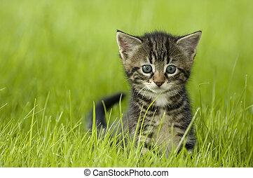 kitten - little kitten playing on the grass close up