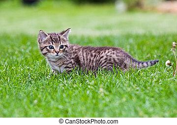 little kitten playing on the grass
