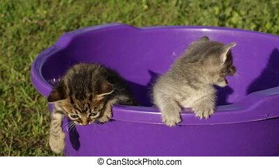 Little kitten playing outdoors
