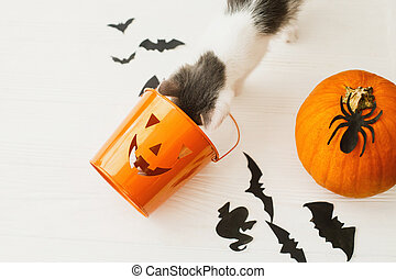Little kitten playing with Jack o lantern candy pail on white background with pumpkin, bats and spider decorations, celebrating halloween at home. Trick or treat!