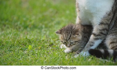 little kitten sits under the protection of his mother -...