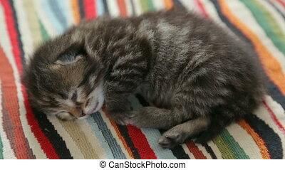 Little kitten sleeping on rug