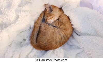 Little kitten sleeps with beige ball skein of thread on cozy...