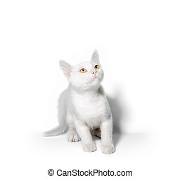 little kitten with yellow eyes looks up on a white background