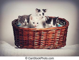 little kittens in a basket
