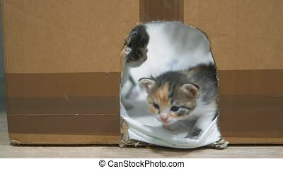 Little kittens in the house and cardboard with the cat make...
