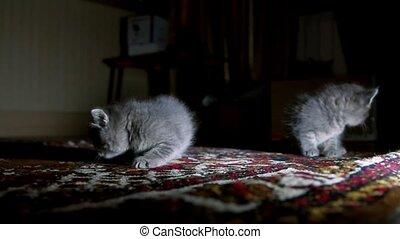 little kittens on walk close up