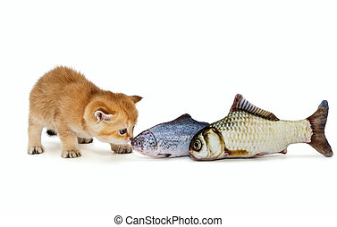 Little kitty and big fish