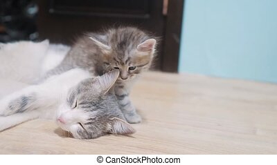 little kitty and cat mom cute video . little cute kitten...
