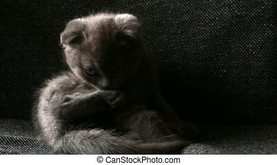 Little Kitty cute washes - Little Cat Animal Kitty cute...