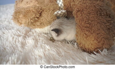little Kitty under the teddy bear on the bed close up