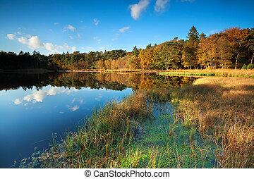 little lake in autumn forest, Roden, Drenthe, Netherlands