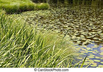 little lake