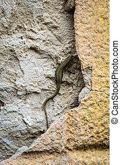 little lizard reptile - lizard crawling in the wall