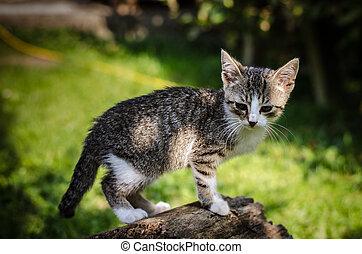 little lovely cat