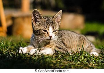 little lovely cat relaxing