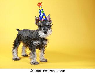 Little Minuature Schnauzer Puppy Dog - Cute Little Minuature...