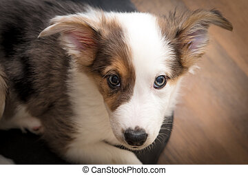 Little mix-breed Puppy Dog looking an the viewer, Portrait...