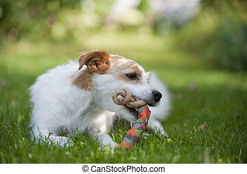 Little mixed breed dog playing in a summer garden