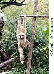 Little monkey hanging on the tree