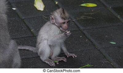 Little monkey kid sitting on floor and eating in Monkey...