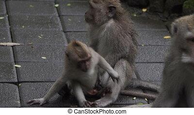 Little monkey kid sitting on floor with monkey parents in...