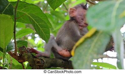 Little monkey on the branch