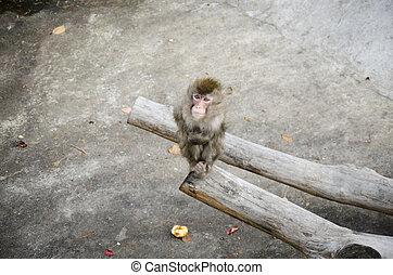 Little monkey sitting on a tree